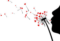 Valentine`s background with love dandelions. Stock Images