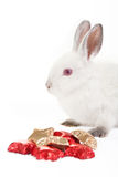 Valentine's bunny. Royalty Free Stock Images