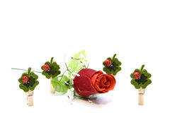 Valentine´s day. Says it through flowers Stock Image