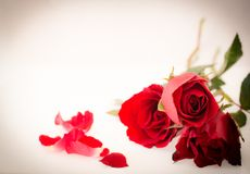 Valentine's day background with red roses. Valentine's day background with beautiful red roses Stock Photo