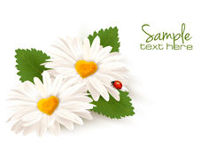 Valentine's Day background. Two daisies with hearts and leaves. Royalty Free Stock Photos