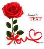 Valentine`s day card. Beauty red rose with bow Royalty Free Stock Image
