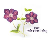 Valentine`s day card with Hand drawn purple Clematis. Branch Stock Illustration