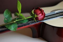 Valentine`s Day card. Red rose with a guitar. royalty free stock photo
