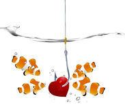 Valentine's Day Concept. Group of clownfish looking at fishhooks prick red hearts Stock Photos
