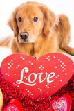 Valentine's Day Dog Stock Photography