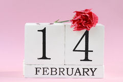 Valentine`s day. 14 february with carnation flower. Royalty Free Stock Photo