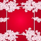 Valentine s Day. Fine art postcard Sakura Flowers. Blooming cherry. illustration Royalty Free Stock Images
