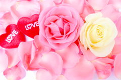 Valentine's day flower and red heart of love.Stock photo Royalty Free Stock Photography