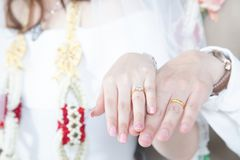 Valentine`s Day is the happiness of couples. Close up Groom hand and bride. picture of man and woman newly wed couple hands with wedding rings. lover Wedding royalty free stock photo