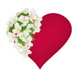 Valentine's Day heart with  white flowers background vector Stock Photo