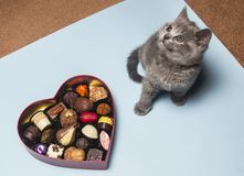 Valentine`s day. Kitten with candy. Heart-shaped box stock photos