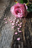 Valentine's Day: pink rose and hearts Royalty Free Stock Photography