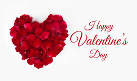 Valentine`s Day. Red roses with petals on white background. Image of Valentines day Royalty Free Stock Photos