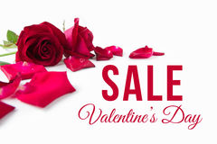 Valentine`s Day. Red roses with petals on white background. Image of Valentines day sale Royalty Free Stock Photo