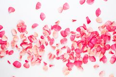 Valentine`s Day. Rose flowers petals on white background. Valentines day background. Flat lay, top view, copy space.  royalty free stock photos