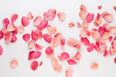 Valentine`s Day. Rose flowers petals on white background. Valentines day background. Flat lay, top view, copy space stock photo