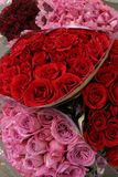 Valentine's Day Roses Royalty Free Stock Image