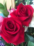 Valentine's Day Roses Stock Images