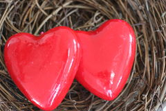Valentine`s Day, two bright red hearts in a nest. Stock Photo