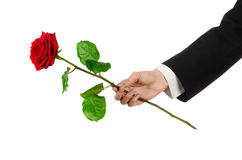 Valentine's Day and Women's Day theme: man's hand in a suit holding a red rose isolated on white background in studio Stock Image