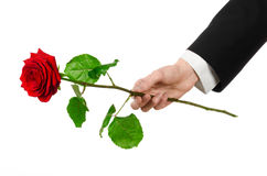 Valentine's Day and Women's Day theme: man's hand in a suit holding a red rose isolated on white background in studio Royalty Free Stock Images