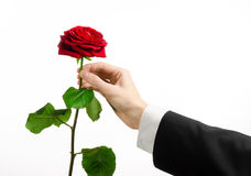 Valentine's Day and Women's Day theme: man's hand in a suit holding a red rose isolated on white background in studio Royalty Free Stock Image