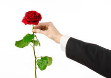 Valentine's Day and Women's Day theme: man's hand in a suit holding a red rose isolated on white background in studio Stock Images