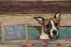 Valentine`s Dog Stock Photography