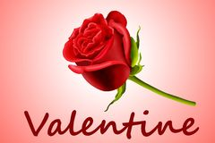 Valentine s'est levé illustration de vecteur