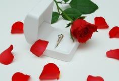Valentine s'est levé 2 Images libres de droits