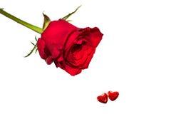 Valentine s'est levé avec deux coeurs Photographie stock