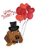 Valentine's Greeting Card with  Cute Dachshund Dog Royalty Free Stock Image