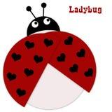Valentine's love lady bug Stock Image