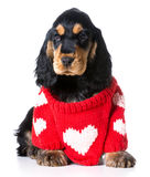 Valentine's puppy Stock Photography