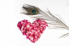 Valentine's Red Rose Heart Petals,Peacock feather Stock Photo