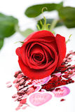 Valentine: Single Red Rose with Water Droplets Royalty Free Stock Photos