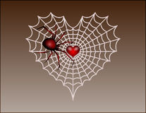 Valentine_spider Stock Image