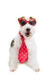 Valentine Terrier Royalty Free Stock Photo