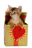 Valentine theme kitten in a present box Stock Photos