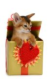 Valentine theme kitten in a present box Royalty Free Stock Photography