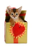 Valentine theme kitten in a present box Royalty Free Stock Photos