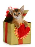 Valentine theme kitten in a present box Stock Photography