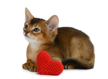 Valentine theme kitten with red heart isolated Stock Images