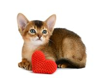 Valentine theme kitten with red heart isolated Royalty Free Stock Images