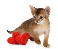 Valentine theme kitten with red heart isolated Royalty Free Stock Photography
