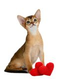 Valentine theme kitten with red heart isolated Stock Photography