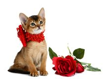 Valentine theme kitten with red heart and rose Stock Images