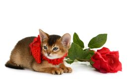Valentine theme kitten with red heart and rose Royalty Free Stock Images