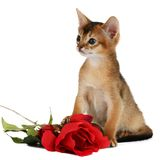 Valentine theme kitten with red rose Stock Image